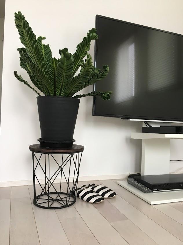 室内で育てやすい観葉植物*初心者でも大丈夫!緑のある暮らしをしよう!